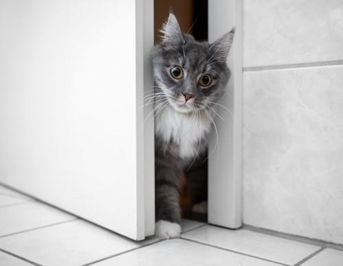 ドアの隙間から入る猫