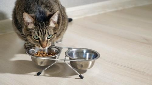食事時の猫