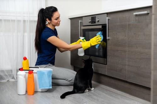 キッチンの掃除をしている女性の隣に座る猫