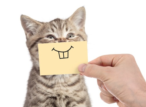 口元に歯の絵が描かれた紙を当てられている猫