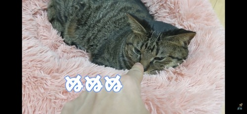 指のにおいを嗅ぐ猫