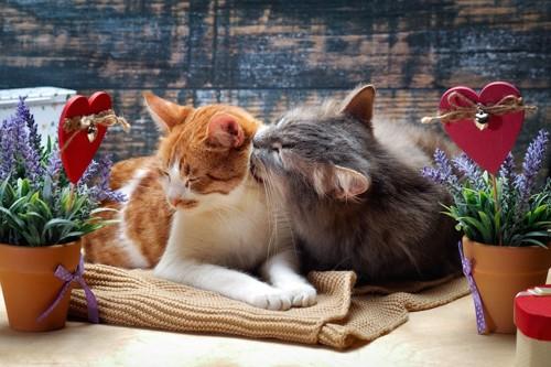 同居猫に毛づくろいをする猫