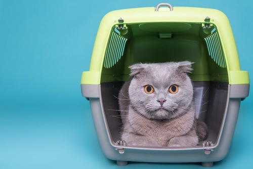 扉が開いているキャリーケースに入っている猫