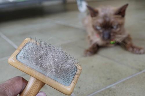 ブラッシング後の被毛とフケ
