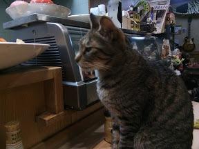 カウンターに猫