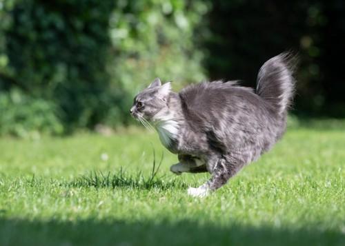 美しく走る猫