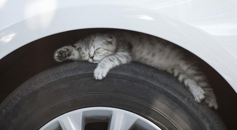 タイヤの上に寝る猫