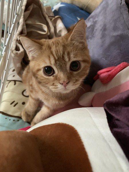 まっすぐ見つめてくる子猫