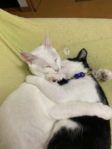 寄り添って眠る男の子猫