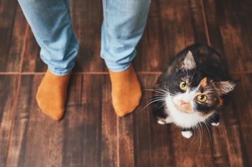 飼い主の足元に座ってこちらを見る猫