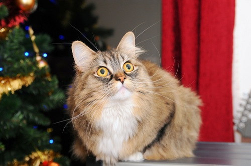 クリスマスのラガマフィン