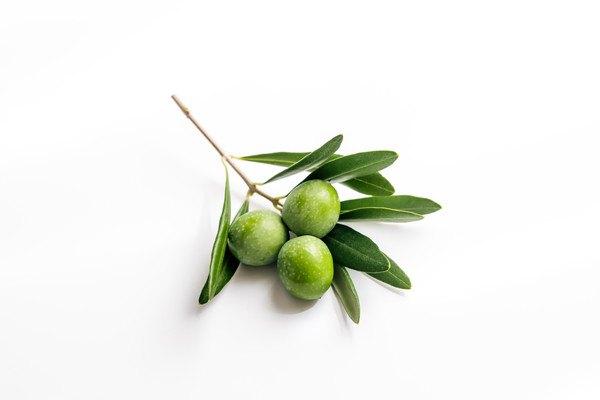 オリーブの実と葉っぱ