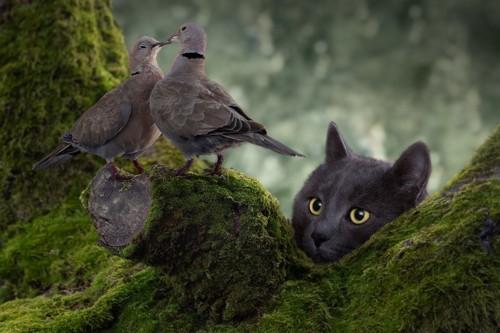 ハトを見る猫