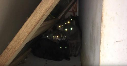 階段の下で目を光らせる猫たち