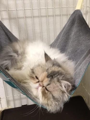 ハンモックに揺られている猫