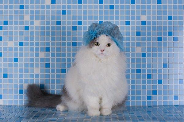 青いタイルの前の猫