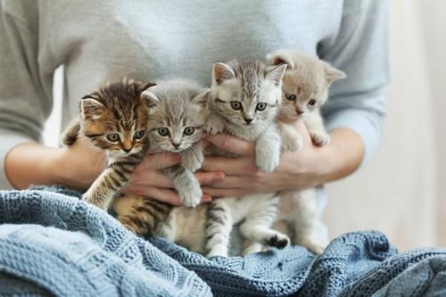 腕に抱えられた子猫たち