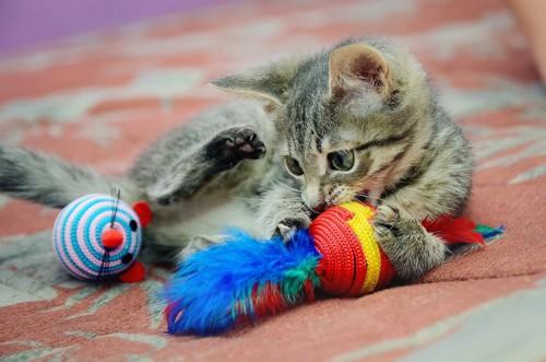 噛むおもちゃと一緒に寝る猫