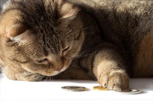 お金を数える猫