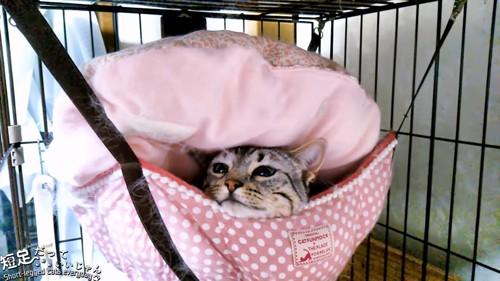 ハンモックで上を向いて目を閉じる猫