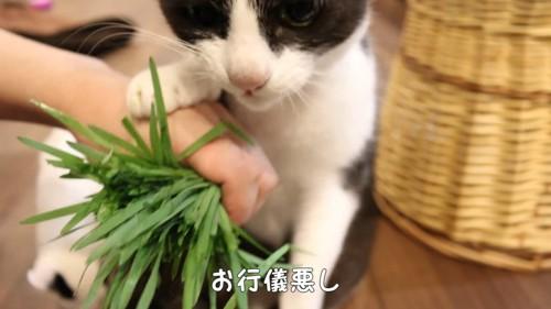 人の手に前足を乗せる猫