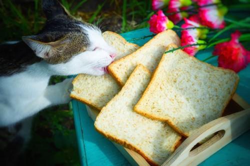 食パンを食べようとする猫