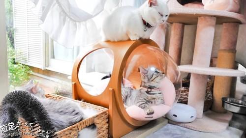 ハウスの上で目を細める白猫