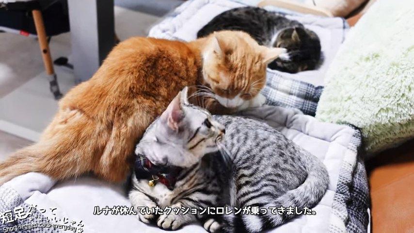 振り向く猫とニオイを嗅ぐ猫