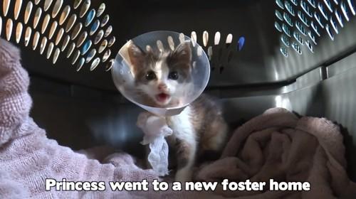 エリザベスカラーをつけた子猫