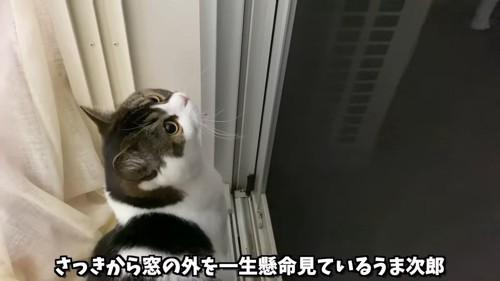 座って見上げる猫