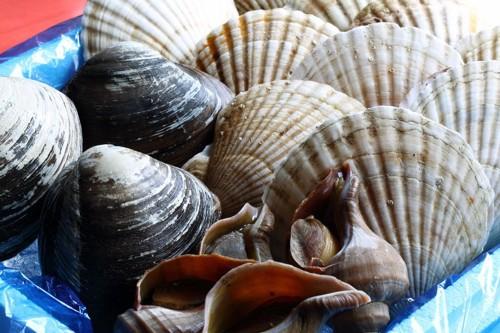 数種類の貝