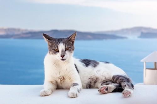 海をバックにくつろぐ猫