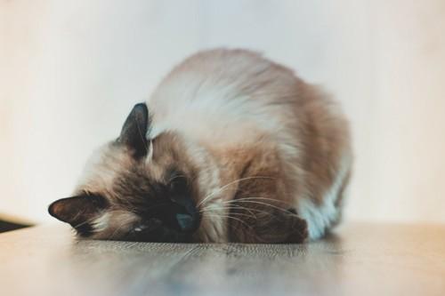 ぐったりな猫