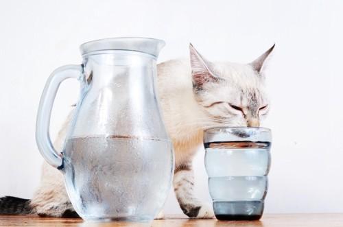 透明なグラスで水を飲む猫