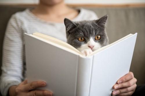 抱っこされて一緒に本を読む猫