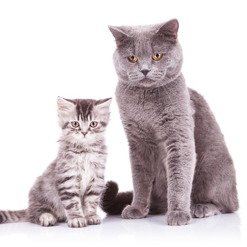 並んで座る大きさの違う二匹の猫