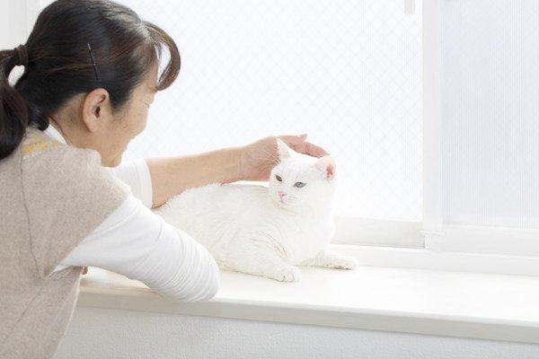 窓辺で撫でられる白猫