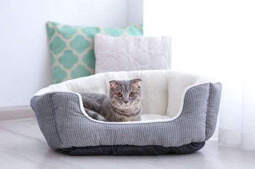 ベッドの中にいる猫