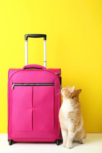 スーツケースと猫