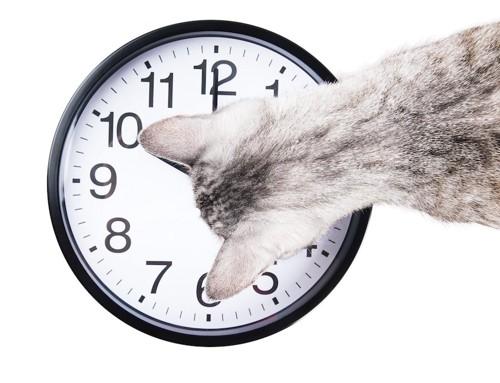 時計を上から見つめる猫