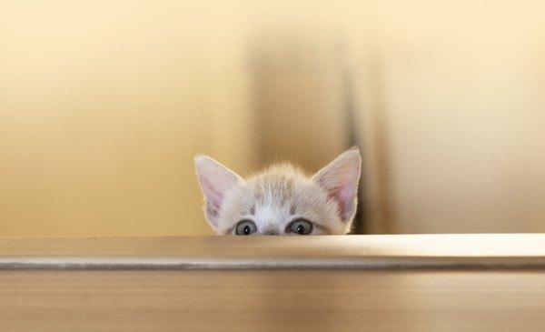 顔をのぞかせる子猫
