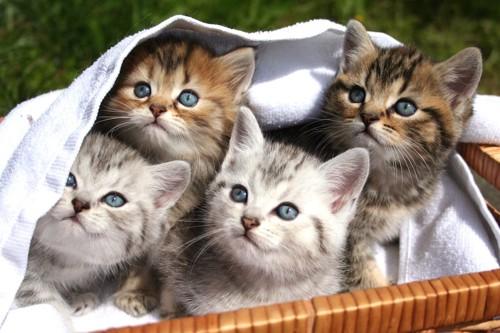 籠に入って同じ方向を見る子猫たち