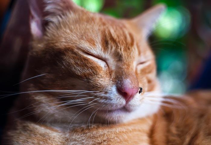 虫が鼻に止まっている猫