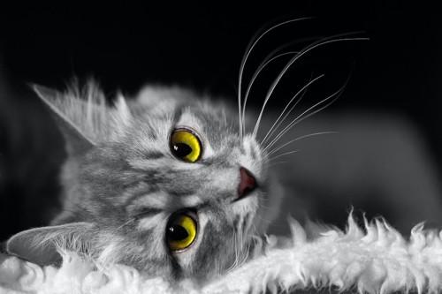 こちらに振り向く猫