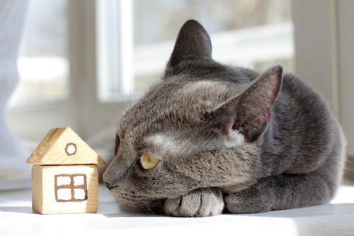 家型の積み木を見る猫