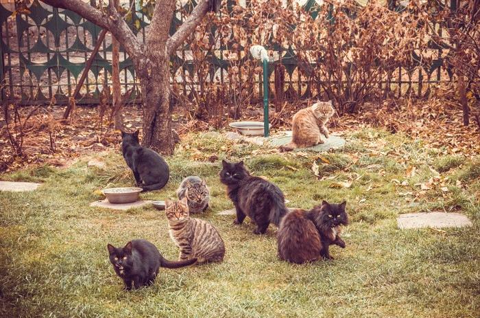 公園にたくさんの猫