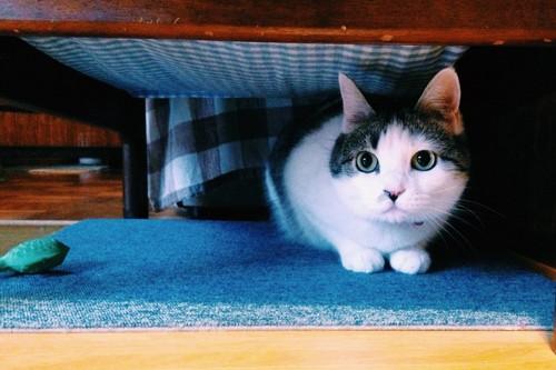 目を見開き隠れる猫