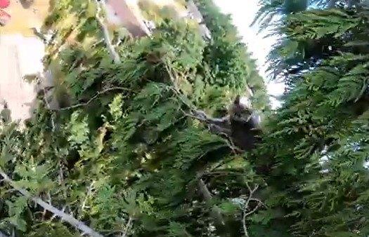 木の先端にいる子猫