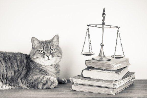 4冊の本と天秤と猫