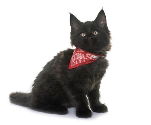 赤いバンダナを巻いている黒猫